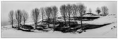 Tree, lines (NOL LUV DI) Tags: snow napier hawkesbay