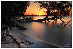 When the sun goes down... (juliewilliams11) Tags: photoborder newsouthwales australia bay waterfront sunset dusk tree longexposure hdr water outdoor
