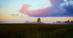 Evening mist (Joni Mansikka) Tags: summer nature mist outdoor field landscape shed sky clouds sunset colours trees silhouettes paimio suomi finland tamronspaf2875mmf28xrdildasphericalif