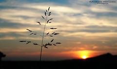 Rametto (Anderama1) Tags: pianta verde cielo foglie