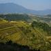 Dazhai - Longsheng Rice Terraces (Dragon's Backbone) 7