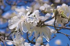 (Pierre Éthier) Tags: macro fleurs jardinbotanique jardinbotaniquemontréal flowersarebeautiful macromix d300s nikond3oos