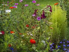 Schlogarten Sanssoucis (s_maclately) Tags: urlaub natur pflanzen potsdam