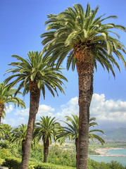 Palm trees in Monastero di Santa Croce courtyard (*Checco*) Tags: park wood blue sea summer vacation sky italy sun plant tree green tourism nature ecology floral beautiful beauty forest garden landscape outdoors leaf high flora paradise italia branch view natural outdoor background object liguria group grow icon it palm frond foliage growth exotic evergreen tropical tropic environment tall outline botany subtropical palma climate boccadimagra ameglia