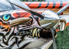 Quest Kodiak 100 With Tiger Paint Scheme (Chris Parmeter Photography (smokinman88)) Tags: arlington plane geotagged nikon colorful paint aircraft tiger 100 quest kodiak flyin d500 80400mm