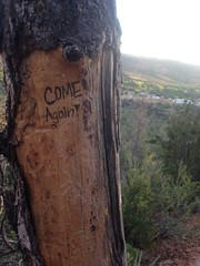 Come Again (Aspire.Greatness) Tags: travel tree beautiful true hiking carve again come