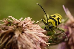 Tough bug (Pavel Cervenka Photographer) Tags: plant detail macro green nature animal yellow closeup canon wow bug insect interesting colorful republic czech outdoor head awesome tube extension tough pavel 6d cervenka ef35f2