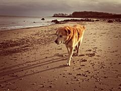 2016-02-03_14-30-37 (torstenbehrens) Tags: hund strand ostsee fehmarn schleswigholstein olympus epm1 digital camera