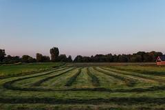 Nasca lines or organized lawn mower (PaulHoo) Tags: holland netherlands nature zevenhoven lumix 2016 summer landscape nasca farmland land mower symmetry lines pattern