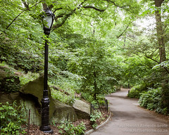 Lamp Post in Central Park, New York