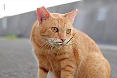 4354 (A-yamabeno) Tags: straycat cat