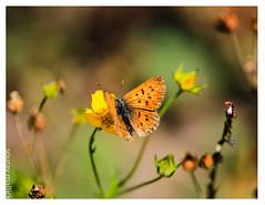 Soft Landing (chagingmind) Tags: macro denverbutterflymuseum sigma180mmhandheld dnc rnc election verizon yahoo google