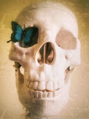 learning to see (***toile filante***) Tags: butterfly schmetterling skull opposites contrasts poetic poetisch