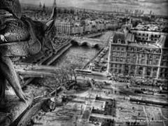 Chimera (Armin Hage) Tags: notredamedeparis notredame chimera gargoyle grotesque paris france frenchgothic gothic arminhage