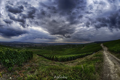 On the road - Pixel Shift (ZeGaby) Tags: champagne hdr landscape nature panorama pentaxk1 pixelshift samyang8mmfisheye vines vineyards