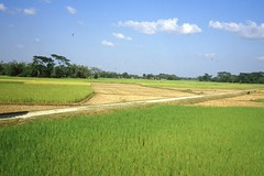thakurgaon077 (Vonkenna) Tags: bangladesh thakurgaon seismicexploration scenery tista road fertile grain