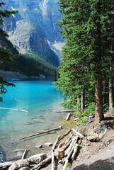Canada Ouest - Lac Moraine (Philippe Maraud) Tags: canada canadaouest lesrocheuses lacmoraine boismort landscape moraine