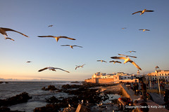 Essaouira, Morocco (Dave G Kelly) Tags: africa blue sky food bird animal horizontal outdoors photography northafrica seagull working morocco essaouira vertebrate flockofbirds cloudsky largegroupofanimals colourimage