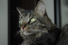 Michín (Jane López) Tags: gatos catsitter niñera gatografía