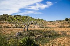 Parque Natural Calblanque, Murcia (Seor L - senorl.blogspot.com.es) Tags: espaa beach canon photography spain playa murcia beaches fotografia playas cabodepalos semanasanta 2015 calblanque peadelaguila montedelascenizas luisalopez parquenaturalcalblanque llopezkm0 luisalopezphotography senorl senorlblogspotcom luiskm0 luisalopezfotografia