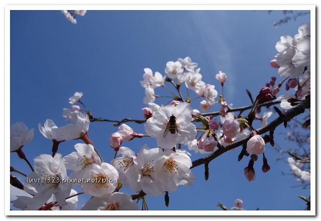 사귀포유체꽃축제47