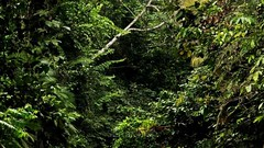 #Ecuador #Yasuni #Amazonas Juzgue usted: ¿Realidad o reflejo? Parte 3 (Soros004B) Tags: trees plants naturaleza reflection verde green nature water río forest river ecuador agua amazon plantas árboles wildlife branches selva bosque jungle reflejo vegetation environment ferns 木 biology 自然 緑 植物 wetland amazonas 水 ecoturismo nationalwildliferefuge ecotourism vegetacion medioambiente ramas helechos ramsar 川 森 biología humedal ethnobotany シダ 反射 環境 vidasilvestre アマゾン 野生生物 ジャングル エコツーリズム yasuninationalpark 湿地帯 エクアドル 支店 植生 thickjungle etnobotánica refugionacionaldevidasilvestre parquenacionalyasuni 生物学 corredorbiológico biologicalcorridor ヤスニ国立公園 民族植物学 厚いジャングル 国立野生生物保護区 ラムサール 生物学的な回廊 selvaespesa