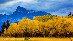 Yellow before Siffleur (mdrew70) Tags: autumn trees mountain canada david mountains fall yellow clouds landscape photography dream may drew alberta eastern thompson slopes siffleur a drewmayphoto
