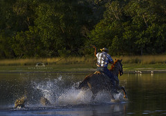 Galope Pantaneiro (Rita Barreto) Tags: brasil salinas cavalo pantanal matogrossodosul galope peão centrooeste aquidauana peãopantaneiro cavalopantaneiro galopepantaneiro