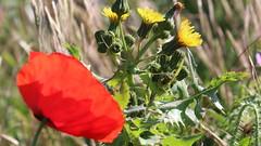 mai 2015 234 (toutenrando) Tags: nature marche chévres vivre marcher respirer randos mai2015