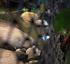 IMG_1549.CR2 (jalexartis) Tags: erosion erosioncontrol stones stonesforerosioncontrol bask basking baskingstone baskingrock aquatic aquatichabitat aquarium abovetanknetting turtlesecurity fallsafe lighting perspective jalexartis