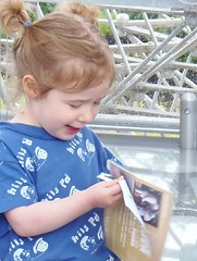 The Hive At Kew Gardens Opening Day @ 18 June 2016 (16/55) (Kam Hong Leung  KEW Gardens_01) Tags: beatriceleung kam kamhongleung leungkamhong brianpitcher carlosmagdalena plantmessiah elibiondi kew kewgardens royalbotanicgarden botanicgarden rbgkew rbg london richmond garden friendofkew waterlilyhouse rockgarden plantfamilybeds daviesalpinehouse wolfgangbuttress thehive hive bee bumblebee honey pollination pollinator architecture yourkew naturalneighbourhood biodiversity glasshouse greenhouse plant flora fauna wildlife flickr twitter broadwalk girl boy mother father parent child kid couple lover marriage proposal