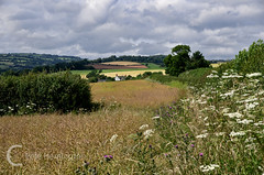 Summer in the Exe Valley