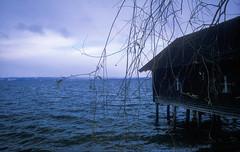 ammersee (flexderfuchs) Tags: ammersee lake bavaria winter canon t90 film analog velvia fuji