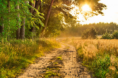 Summer dust (piotrekfil) Tags: nature landscape road forest wood tree sun sunset field path sunlight pentax poland piotrfil