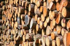 The Log Pile (robin denton) Tags: grasswood yorkshiredales yorkshiredalesnationalpark nationalpark nature yorkshirewildlifetrust wildlifetrust northyorkshire wharfedale hdr logs logpile