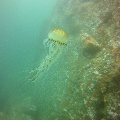 18 July 2016 - Scillies Trip PICT0191 (severnsidesubaqua) Tags: scillies scilly scuba diving
