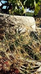 Il pozzo (Rosamaria Rizzato) Tags: erba secco grass well