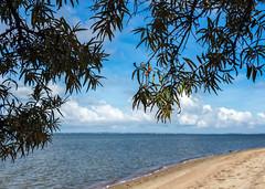 (klgfinn) Tags: autumn balga bay buckthorn cloud landscape leaf sand seabuckthorn shore sky skyline tree water