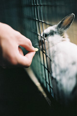 (chopchops) Tags: new baby white color colour rabbit film animal analog 35mm photography kitten dof hand minolta kodak bokeh eating norfolk professional mc feed analogue rabbits portra 58mm f12 160 c41 rokkor reedham x500 kodakportra160 minoltax500 pettitts pettittsanimaladventurepark