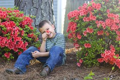 Cary Spring (kurt_hilton_photography) Tags: flowers trees boy red portrait flower nature lines pine fun 50mm nc spring eyes triangle cowboy day azaleas boots jeans cary d5200