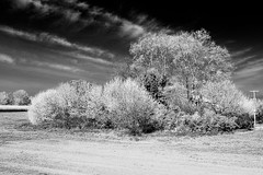Rve (RS...) Tags: blackandwhite noiretblanc d800 camargue fauxinfrared fauxinfrarouge