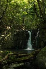 Medoko-Falls (RenField - Toel-ul Laputa) Tags: green fall nature japan 35mm nikon kagoshima  nikkor fx          nd16  d800e