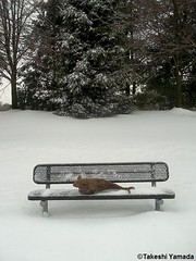 Seara (sea rabbit) on the snow covered bench on the street on February 22, 2015. The Northeastern United States endured another very cold (far below average temperature) and longer winter months during 2014 and 2015. New York. 20150222 014==C. (searabbits23) Tags: snow ny newyork sexy celebrity art hat fashion animal brooklyn painting asian coneyisland japanese star costume tv google king artist dragon god cosplay manhattan wildlife famous gothic goth performance pop taxidermy vogue cnn tuxedo bikini tophat unitednations playboy entertainer takeshi samurai genius mermaid amc johnnydepp mardigras salvadordali unicorn billclinton billgates aol vangogh curiosities sideshow jeffkoons globalwarming takashimurakami pablopicasso steampunk yamada damienhirst cryptozoology freakshow barackobama seara immortalized takeshiyamada museumofworldwonders roguetaxidermy searabbit ladygaga climategate minnesotaassociationofroguetaxidermists  birthdayoflordbadenpowell