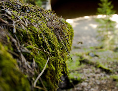 "Moss at the side (Vidar ""the Viking"" Ringstad, Norway) Tags: shadow sun cold tree nature sunshine norway closeup pine canon eos norge moss spring outdoor norwegen ground historic 7d pow historicplace trandum natureshot colourfull naturepic trandumskogen"