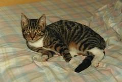 Jonas der Erste (ute_hartmann) Tags: kater eingescannt jonasdererste