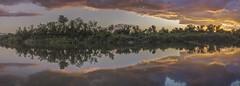 Nature's Guitar (Joe Tabadero) Tags: nature reflections nikon philippines symmetry gitzo pangasinan mangaldan d7000 angalacanriver
