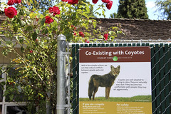 Happy Coyote Fence Friday (ruthlesscrab) Tags: hff fence fencefriday coyote warning queenelizabethpark vancouver bc canada