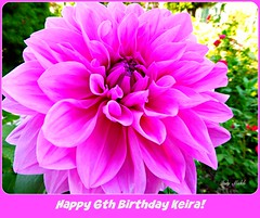 """""""You are allowed to be both a Masterpiece and a work in progress, simultaneously""""  - Sophia Bush (Trinimusic2008 - stay blessed) Tags: trinimusic2008 judymeikle nature dedication happy6thbirthdaykeira card grandchild flower pink toronto to ontario canada"""