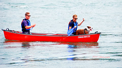 DOGGY PADDLE. (tommypatto : Libert, galit, fraternit) Tags: northwales anglesey rivers boats canoes dogs humour