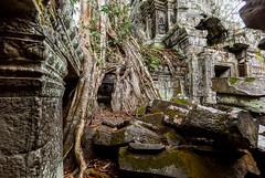 Ta Prohm 7, Angkor (Siem Reap) (bienve958) Tags: camboia siemreap taprohm krongsiemreap camboya kh angkoriantemples angkor temple worldheritageunesco khmerkingjayavarmanvii mahayanabuddhist colefranaisedextrme patrimoniodelahumanidad trees arbol ficusgibbosa arquitecturajemer cambodia estilobayon saariysqualitypictures